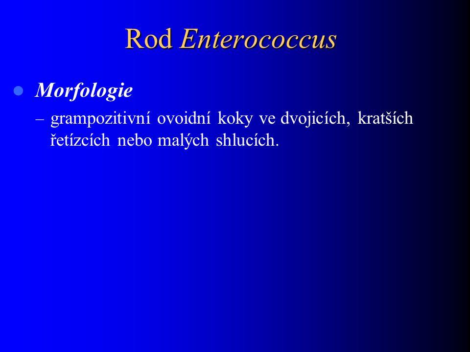 Rod Enterococcus Morfologie – grampozitivní ovoidní koky ve dvojicích, kratších řetízcích nebo malých shlucích.