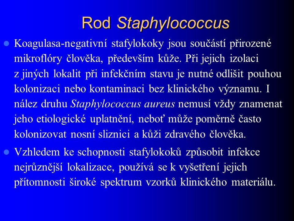 Rod Staphylococcus – Morfologie grampozitivní koky uspořádané převážně v hloučcích, nesporulující, většinou neopouzdřené.
