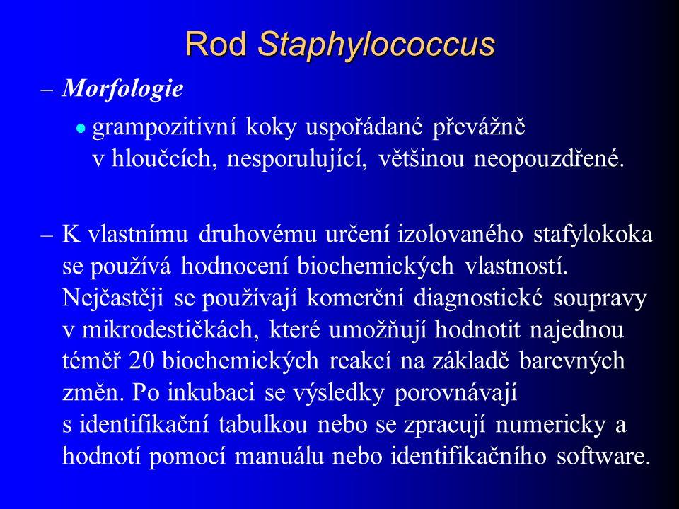Rod Staphylococcus – Morfologie grampozitivní koky uspořádané převážně v hloučcích, nesporulující, většinou neopouzdřené. – K vlastnímu druhovému urče
