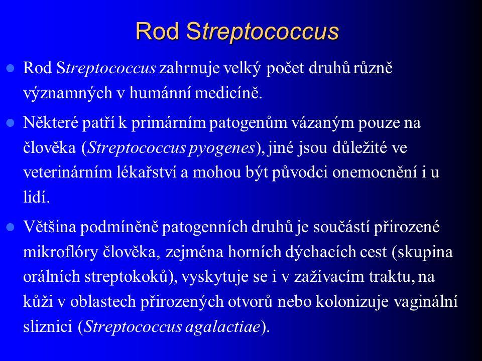 Rod Streptococcus Rod Streptococcus zahrnuje velký počet druhů různě významných v humánní medicíně. Některé patří k primárním patogenům vázaným pouze