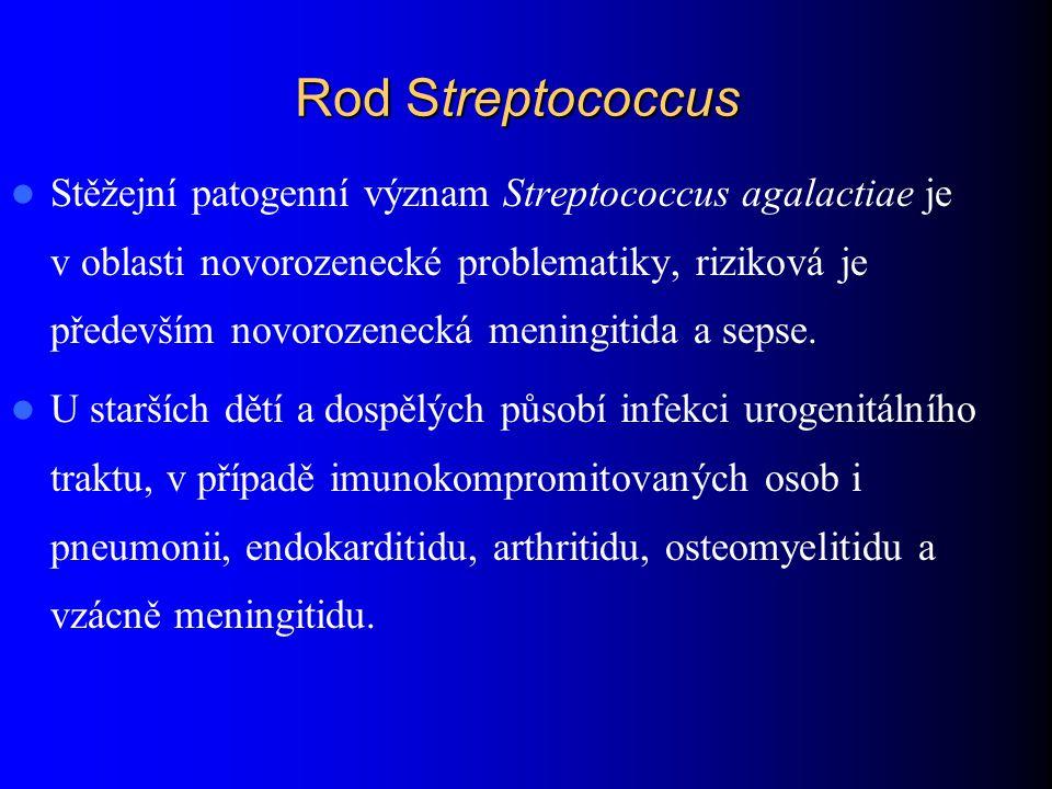 Rod Streptococcus Stěžejní patogenní význam Streptococcus agalactiae je v oblasti novorozenecké problematiky, riziková je především novorozenecká meni
