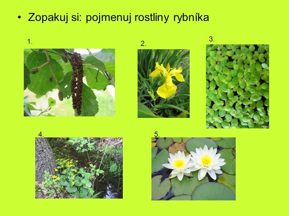 Zopakuj si: pojmenuj rostliny rybníka 1. 2. 3. 4.5.