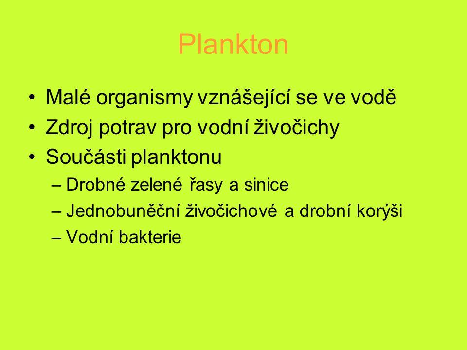 Plankton Malé organismy vznášející se ve vodě Zdroj potrav pro vodní živočichy Součásti planktonu –Drobné zelené řasy a sinice –Jednobuněční živočicho