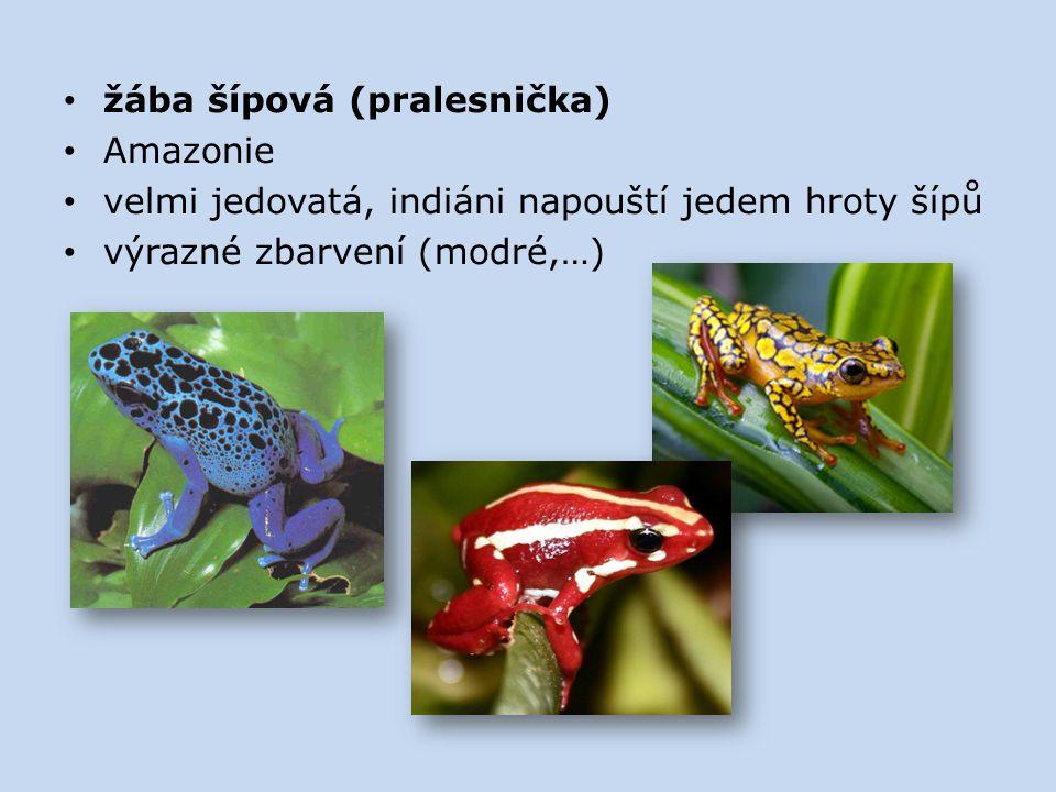 žába šípová (pralesnička) Amazonie velmi jedovatá, indiáni napouští jedem hroty šípů výrazné zbarvení (modré,…)