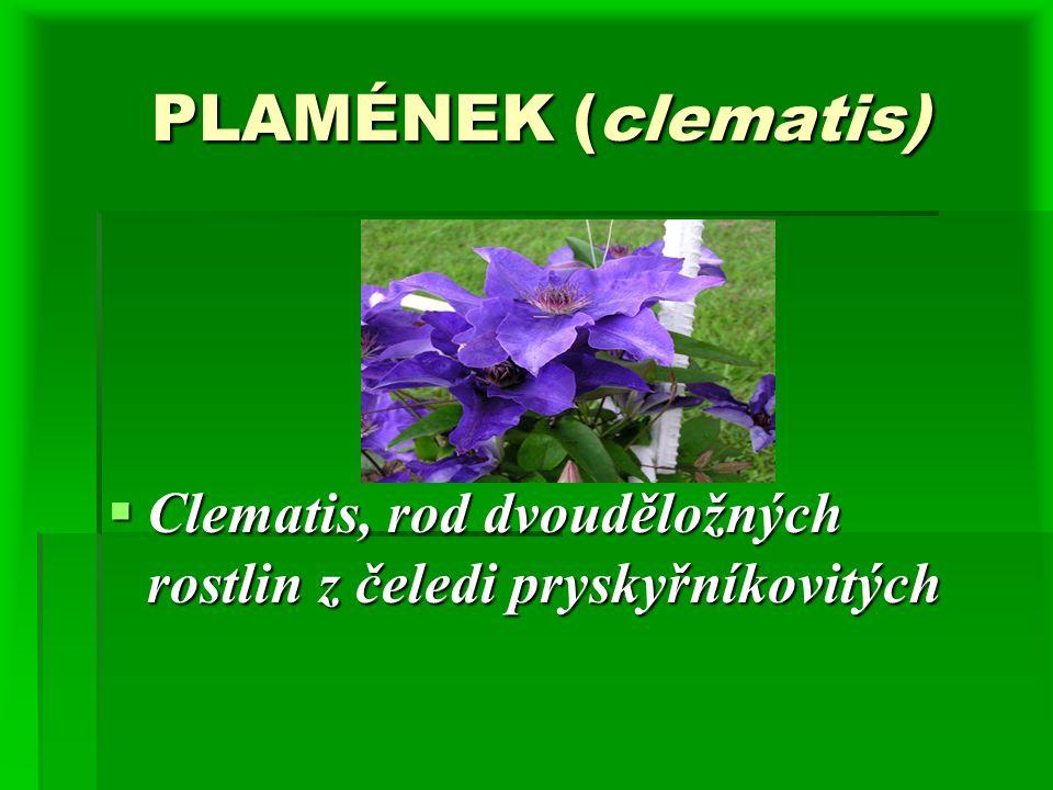 PLAMÉNEK (clematis) PLAMÉNEK (clematis)  Clematis, rod dvouděložných rostlin z čeledi pryskyřníkovitých