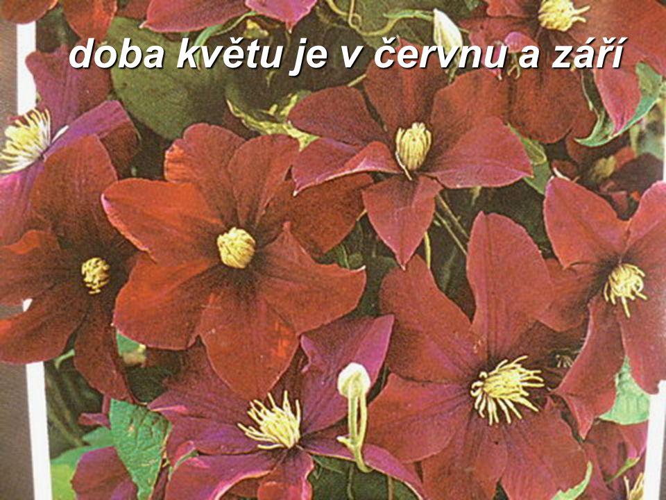 doba květu je v červnu a září