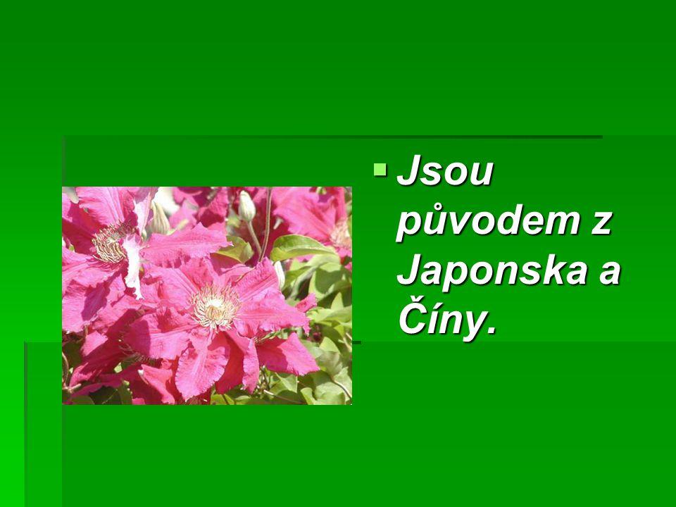  Jsou původem z Japonska a Číny.