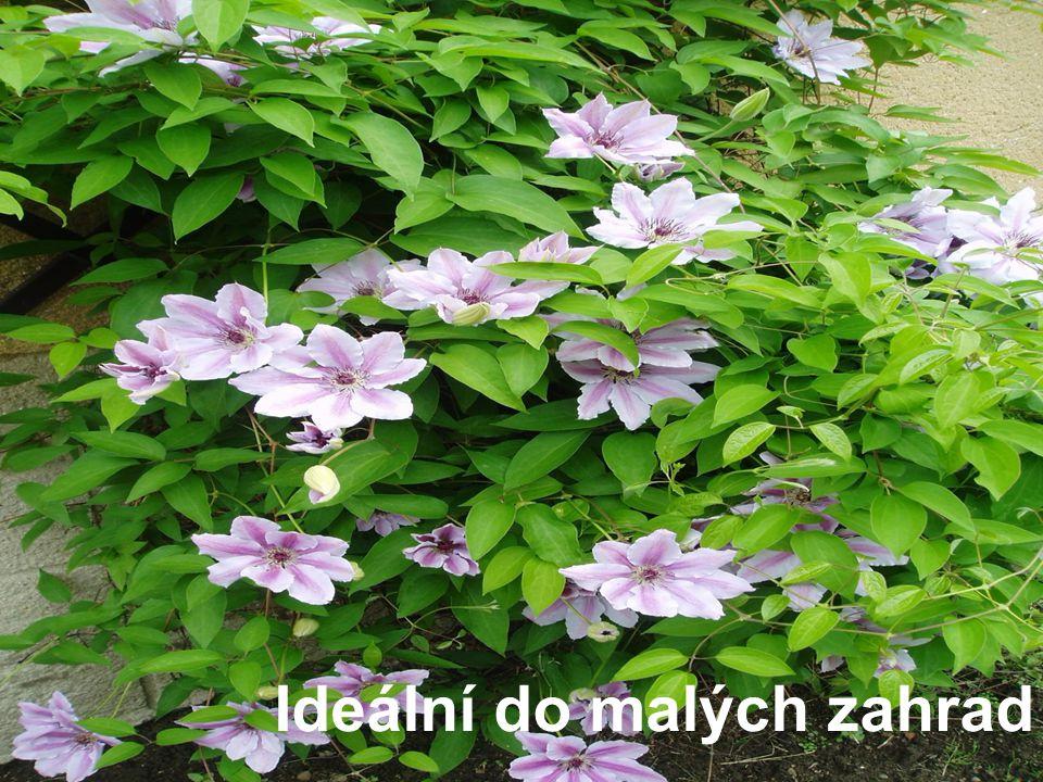 Ideální do malých zahrad