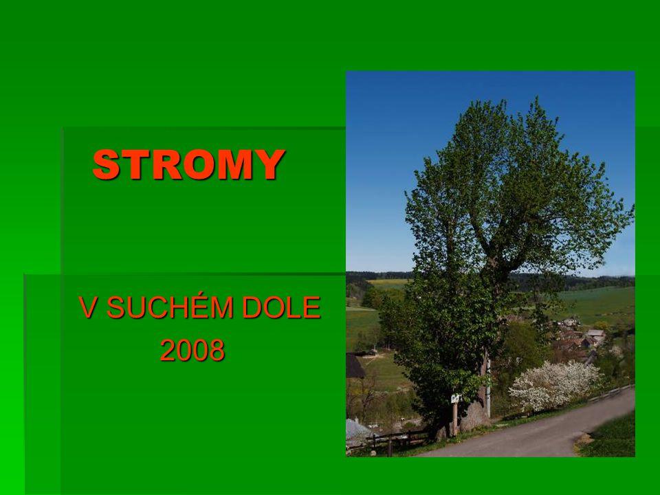 STROMY STROMY V SUCHÉM DOLE 2008 2008