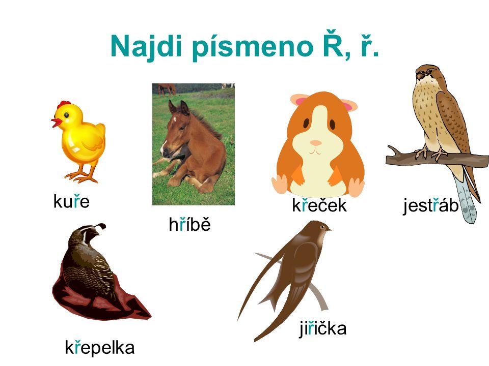 Najdi písmeno Ř, ř. kuře hříbě křeček křepelka jiřička jestřáb