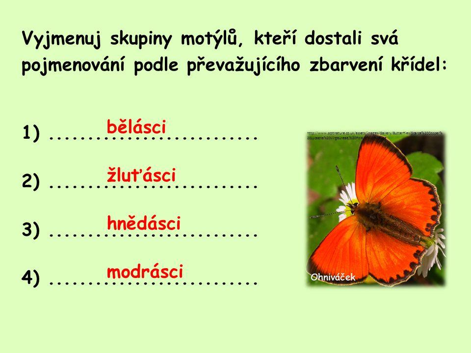 Vyjmenuj motýly, kteří mají na svých křídlech skvrny tvaru očí: 1)...........................