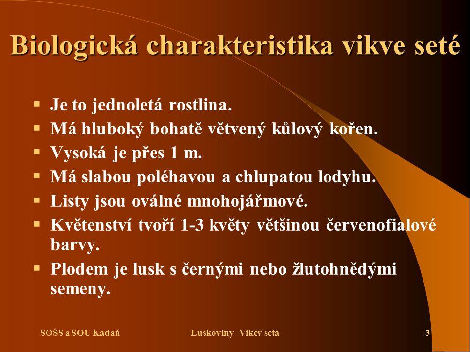 SOŠS a SOU KadaňLuskoviny - Vikev setá3 Biologická charakteristika vikve seté  Je to jednoletá rostlina.  Má hluboký bohatě větvený kůlový kořen. 