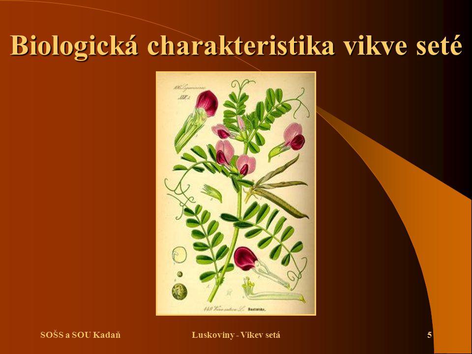 SOŠS a SOU KadaňLuskoviny - Vikev setá5 Biologická charakteristika vikve seté