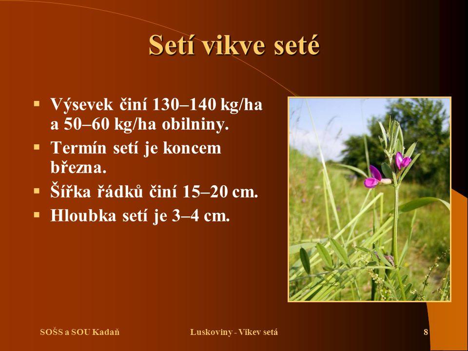 SOŠS a SOU KadaňLuskoviny - Vikev setá8 Setí vikve seté  Výsevek činí 130–140 kg/ha a 50–60 kg/ha obilniny.  Termín setí je koncem března.  Šířka ř