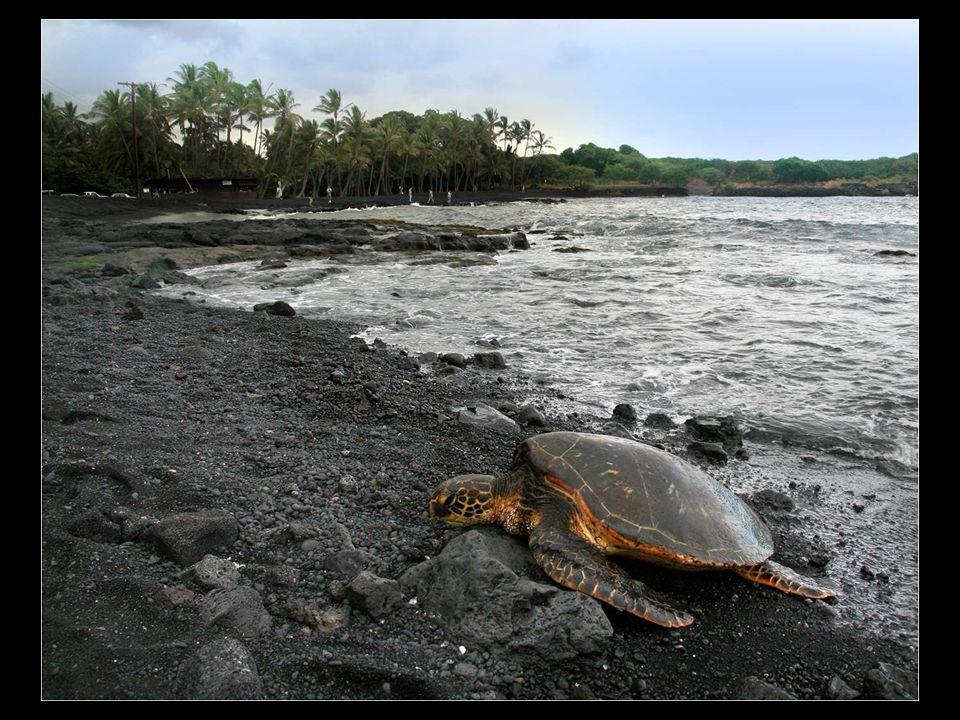 Punaluu je pláž mezi Pahala a Na Alehu, na Hawaji.