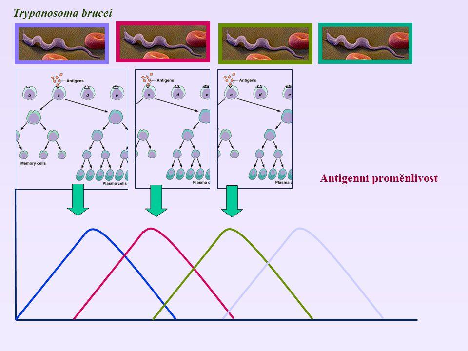 Trypanosoma brucei Antigenní proměnlivost