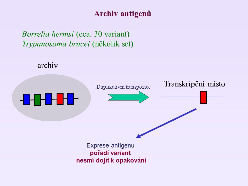 Archiv antigenů Borrelia hermsi (cca. 30 variant) Trypanosoma brucei (několik set) archiv Duplikativní transpozice Transkripční místo Exprese antigenu