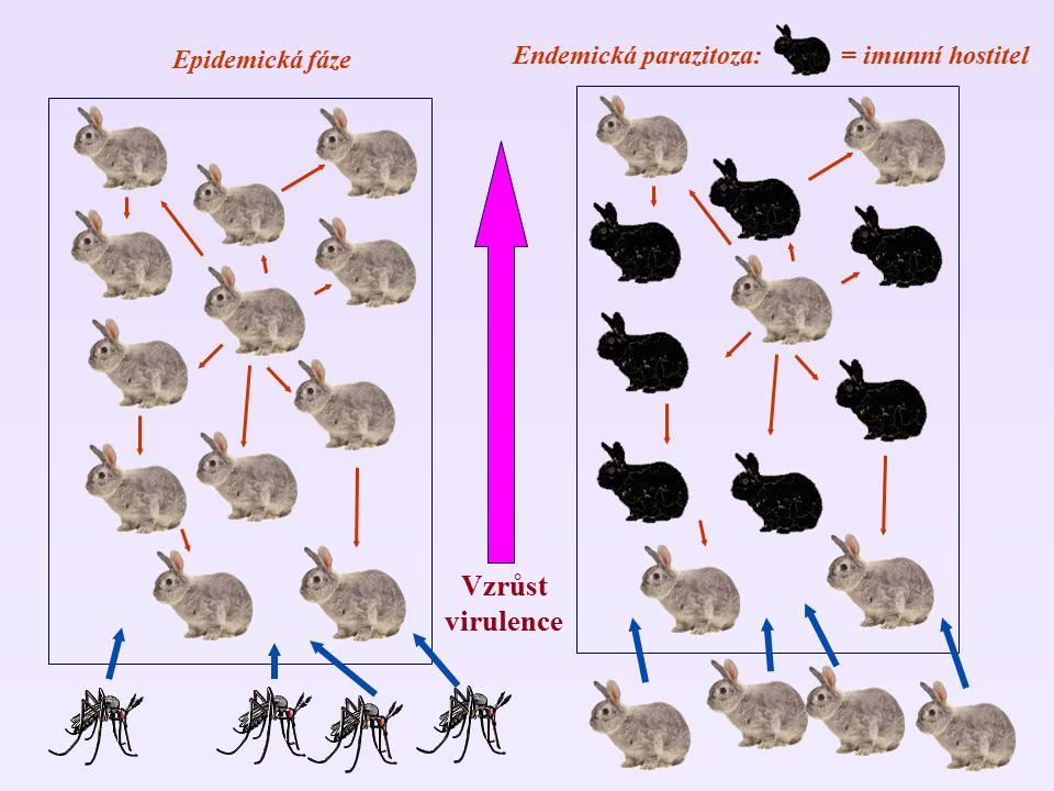 Endemická parazitoza: = imunní hostitel Epidemická fáze Vzrůst virulence