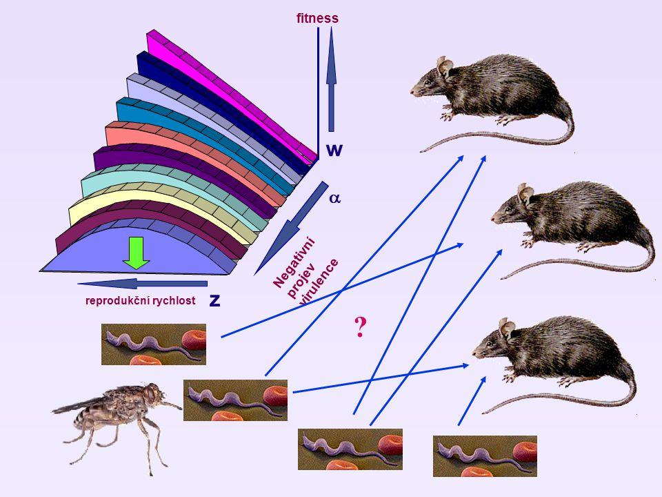 w fitness  Negativní projev virulence reprodukční rychlost z z ?