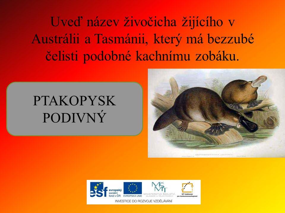 Uveď název živočicha žijícího v Austrálii a Tasmánii, který má bezzubé čelisti podobné kachnímu zobáku. PTAKOPYSK PODIVNÝ