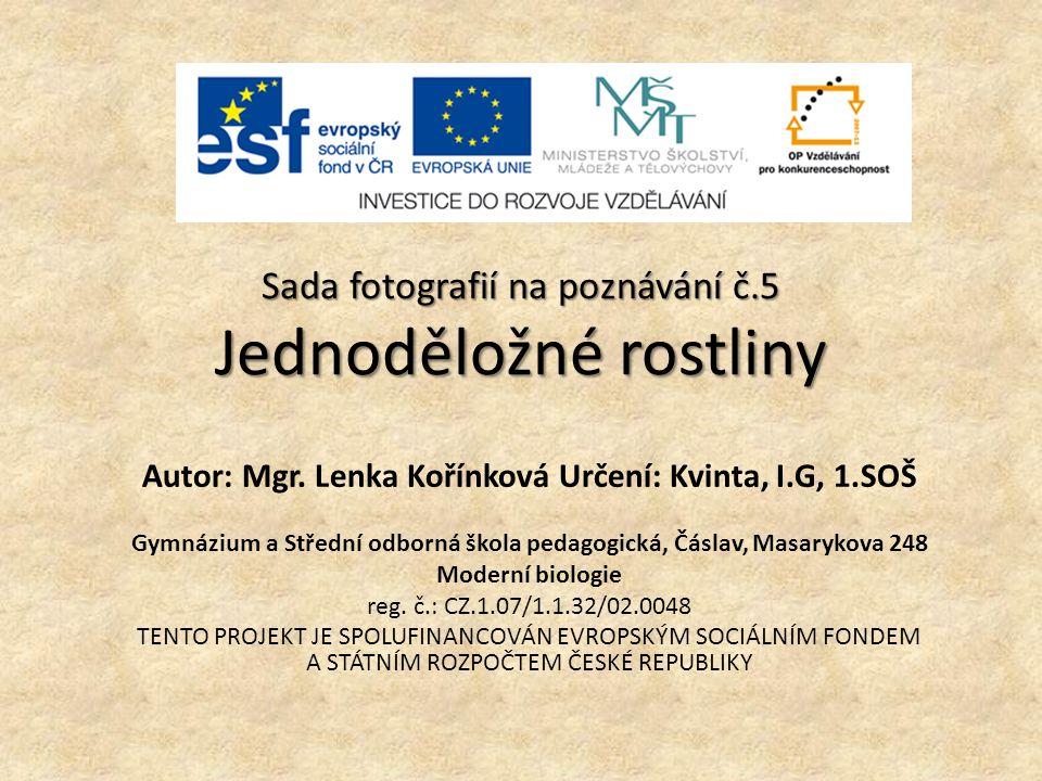 SADA FOTOGRAFIÍ NA POZNÁVÁNÍ verze č.3 JEDNODĚLOŽNÉ ROSTLINY Úkol: Uveďte české názvy rostlin na předložených fotografiích.