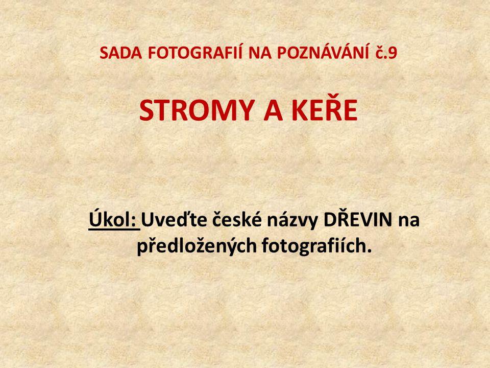 SADA FOTOGRAFIÍ NA POZNÁVÁNÍ č.9 STROMY A KEŘE Úkol: Uveďte české názvy DŘEVIN na předložených fotografiích.