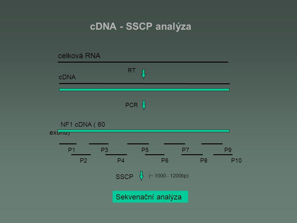 cDNA - SSCP analýza RT cDNA PCR NF1 cDNA ( 60 exonů) P1 P3 P5 P7 P9 P2 P4 P6 P8 P10 SSCP (~ 1000 - 1200bp) Sekvenační analýza celková RNA