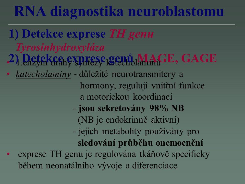 RNA diagnostika neuroblastomu 1.enzym dráhy syntézy katecholaminů katecholaminy - důležité neurotransmitery a hormony, regulují vnitřní funkce a motor