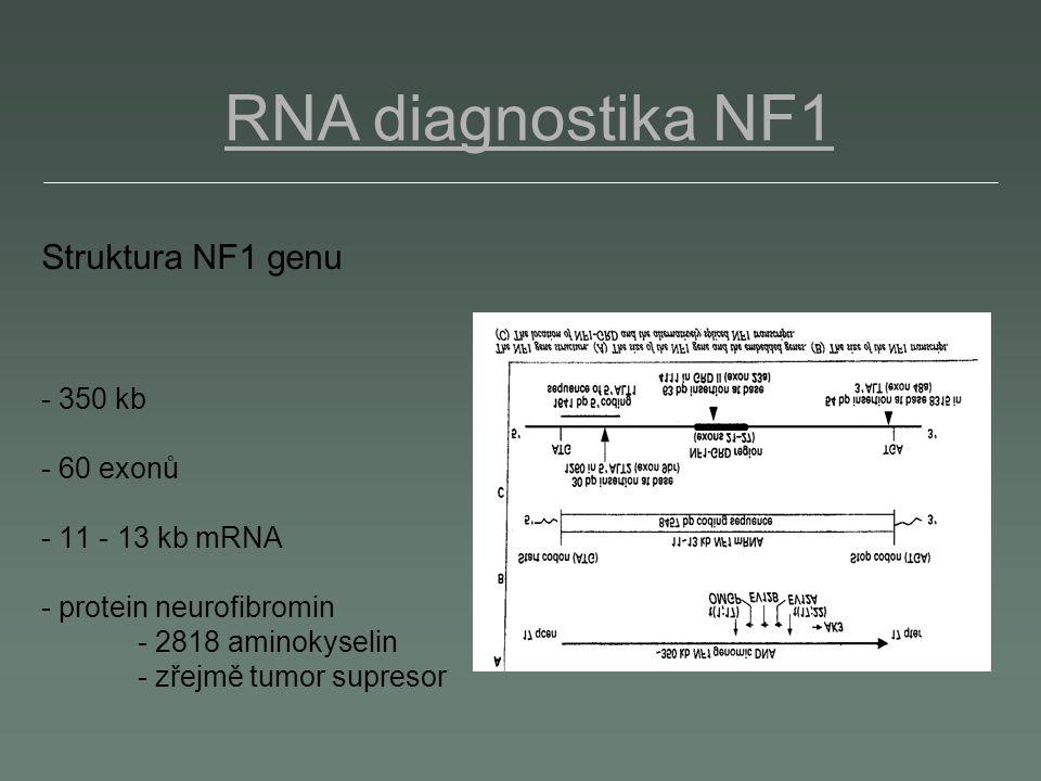 Struktura NF1 genu - 350 kb - 60 exonů - 11 - 13 kb mRNA - protein neurofibromin - 2818 aminokyselin - zřejmě tumor supresor RNA diagnostika NF1