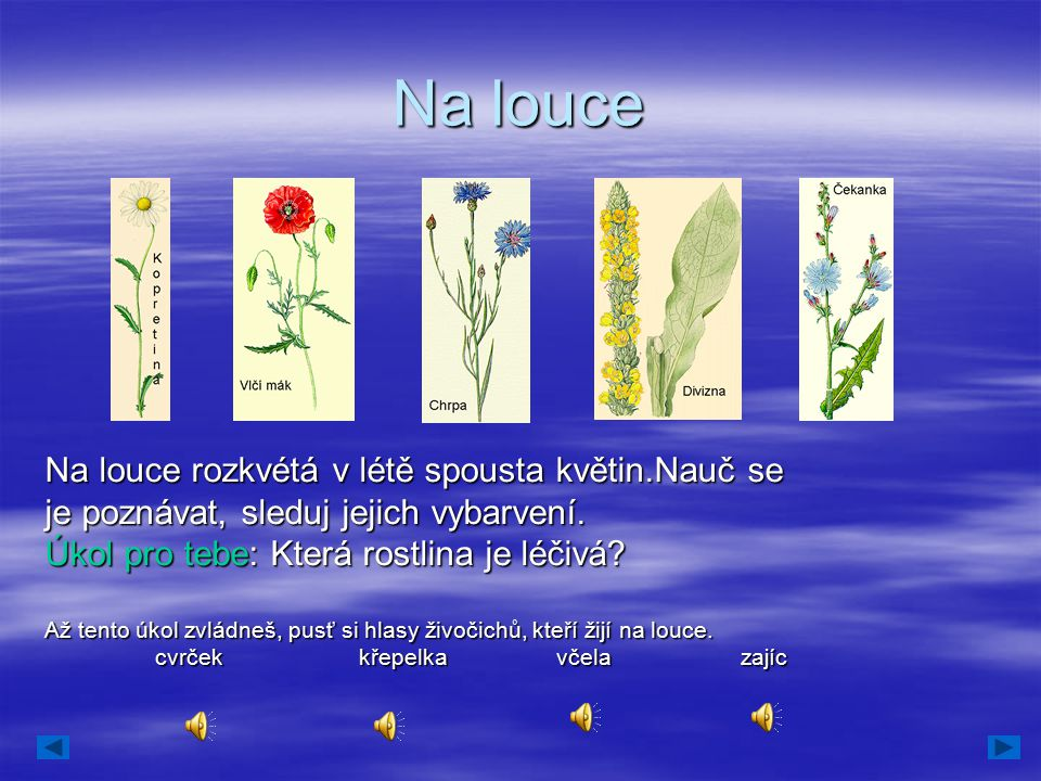 Na louce Na louce rozkvétá v létě spousta květin.Nauč se je poznávat, sleduj jejich vybarvení. Úkol pro tebe: Která rostlina je léčivá? Až tento úkol