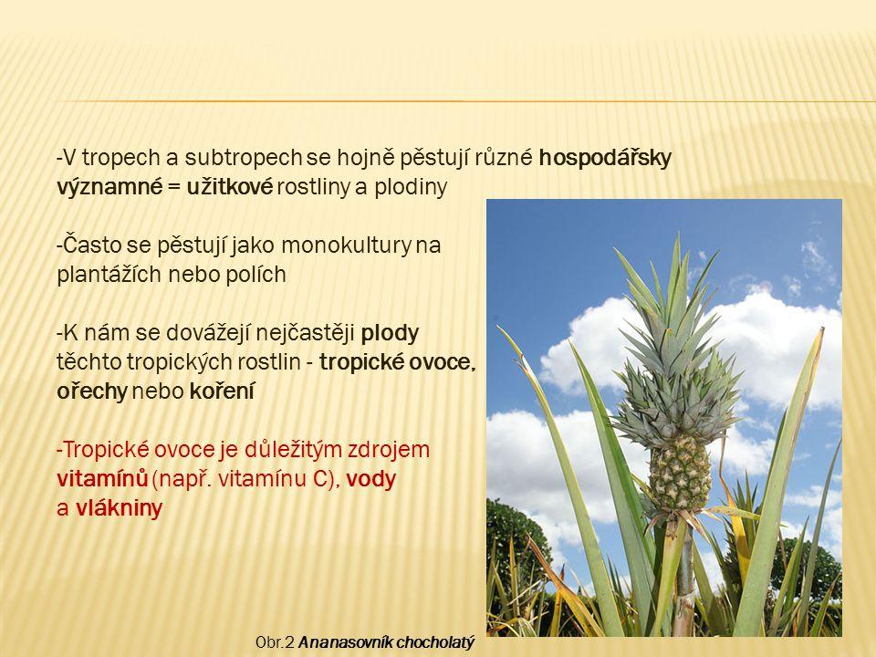 Obr.2 Ananasovník chocholatý -V tropech a subtropech se hojně pěstují různé hospodářsky významné = užitkové rostliny a plodiny -Často se pěstují jako