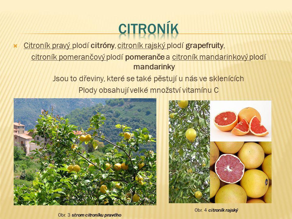  Citroník pravý plodí citróny, citroník rajský plodí grapefruity, citroník pomerančový plodí pomeranče a citroník mandarinkový plodí mandarinky Jsou
