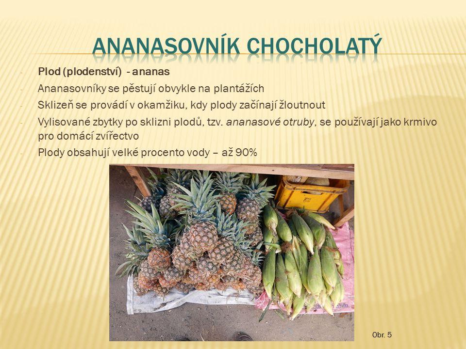 - Plod (plodenství) - ananas - Ananasovníky se pěstují obvykle na plantážích - Sklizeň se provádí v okamžiku, kdy plody začínají žloutnout - Vylisovan