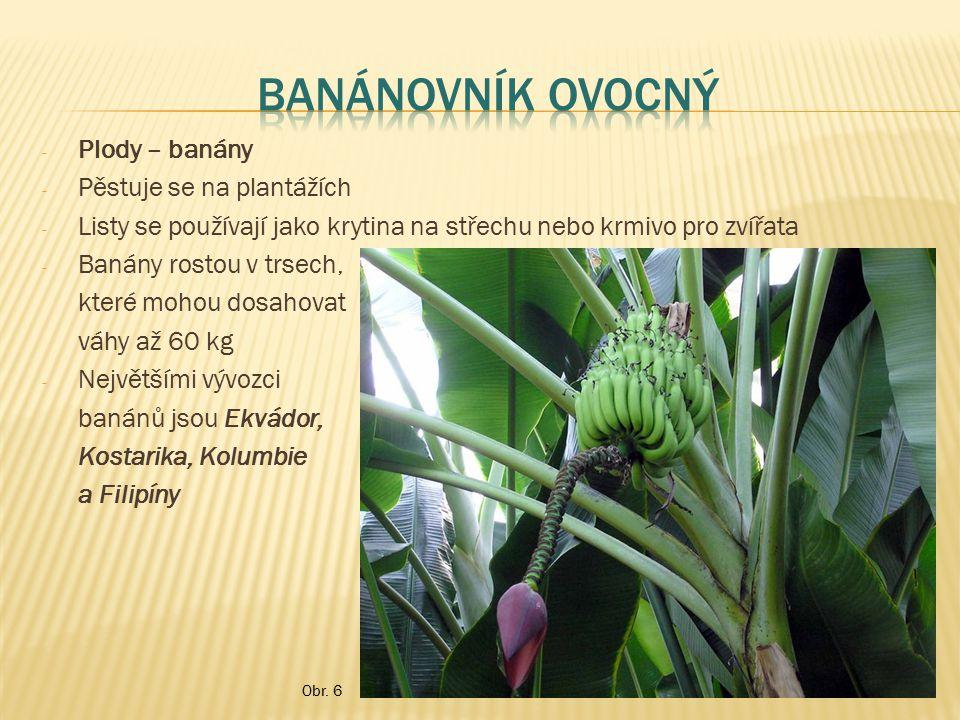 - Plody – banány - Pěstuje se na plantážích - Listy se používají jako krytina na střechu nebo krmivo pro zvířata - Banány rostou v trsech, které mohou
