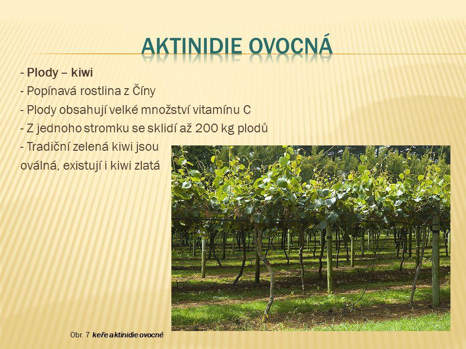 - Plody – kiwi - Popínavá rostlina z Číny - Plody obsahují velké množství vitamínu C - Z jednoho stromku se sklidí až 200 kg plodů - Tradiční zelená k