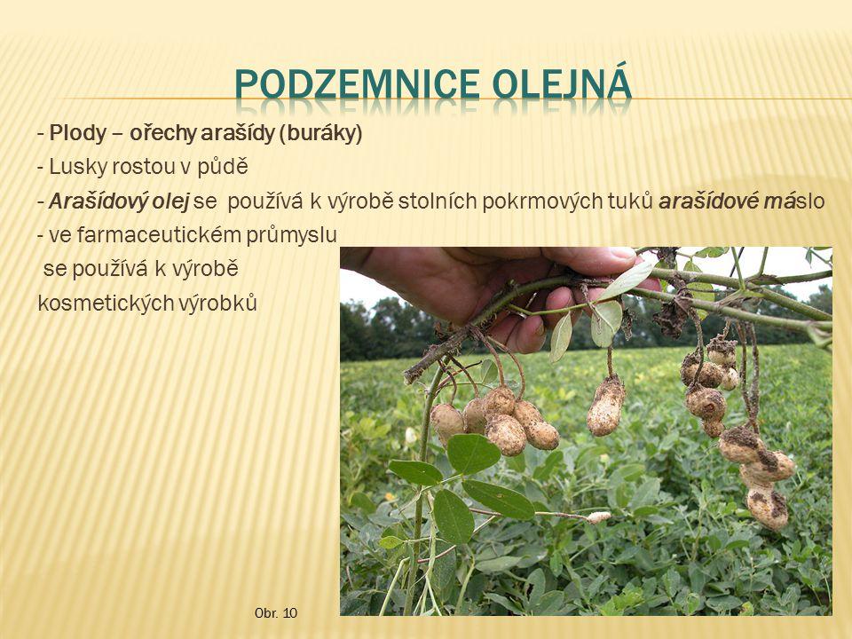 - Plody – ořechy arašídy (buráky) - Lusky rostou v půdě - Arašídový olej se používá k výrobě stolních pokrmových tuků arašídové máslo - ve farmaceutic