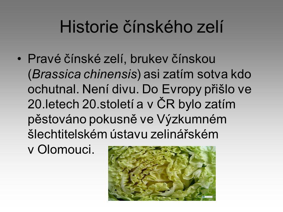 Historie čínského zelí Pravé čínské zelí, brukev čínskou (Brassica chinensis) asi zatím sotva kdo ochutnal.