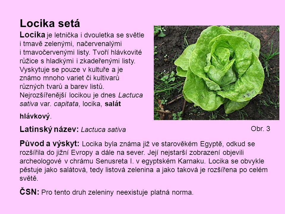 Locika setá Locika je letnička i dvouletka se světle i tmavě zelenými, načervenalými i tmavočervenými listy. Tvoří hlávkovité růžice s hladkými i zkad