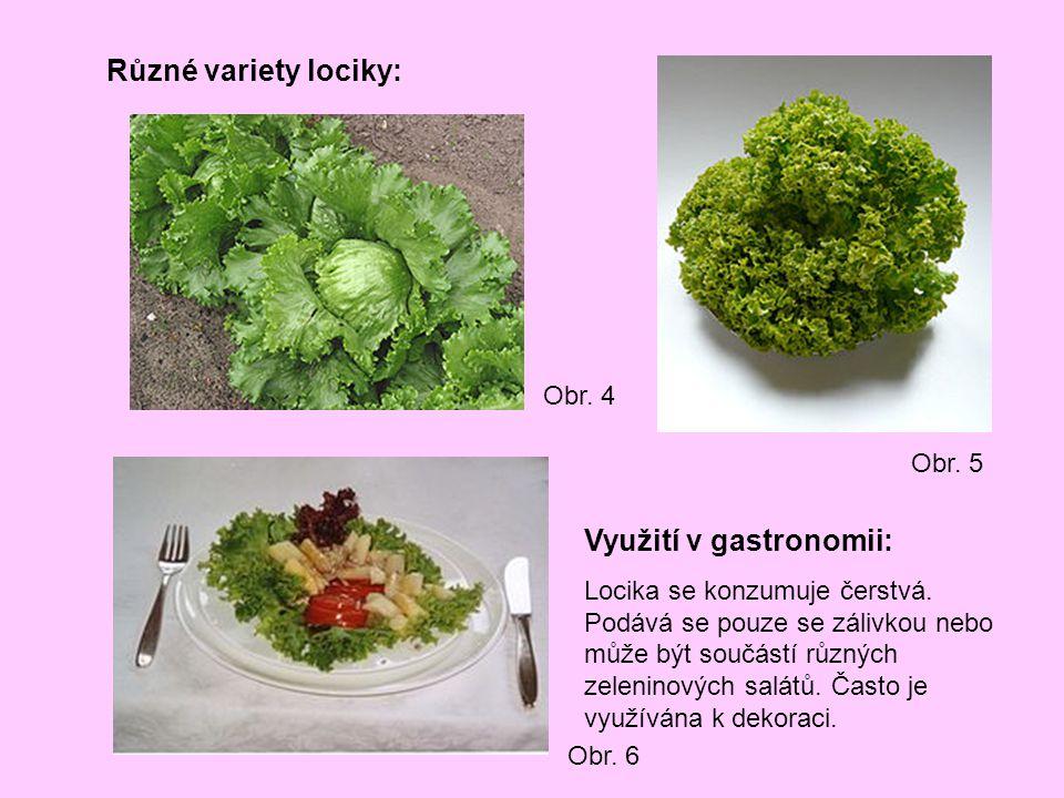 Využití v gastronomii: Locika se konzumuje čerstvá. Podává se pouze se zálivkou nebo může být součástí různých zeleninových salátů. Často je využívána