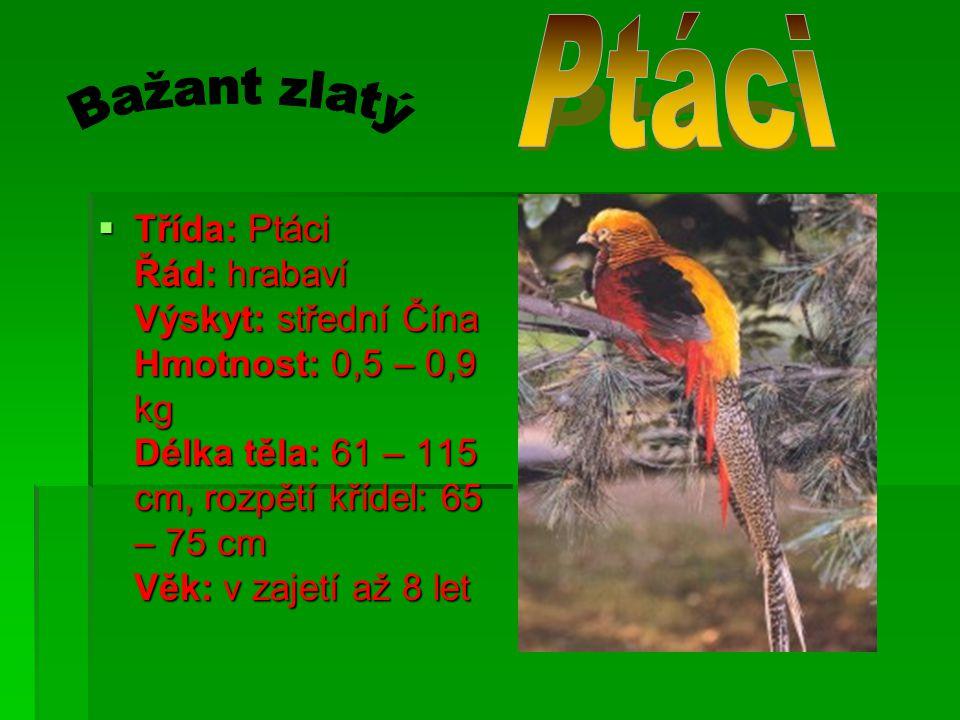 TTTTřída: Ptáci Řád: hrabaví Výskyt: střední Čína Hmotnost: 0,5 – 0,9 kg Délka těla: 61 – 115 cm, rozpětí křídel: 65 – 75 cm Věk: v zajetí až 8 let