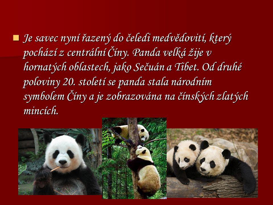Je savec nyní řazený do čeledi medvědovití, který pochází z centrální Číny. Panda velká žije v hornatých oblastech, jako Sečuán a Tibet. Od druhé polo