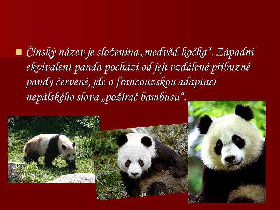 """Čínský název je složenina """"medvěd-kočka"""". Západní ekvivalent panda pochází od její vzdálené příbuzné pandy červené, jde o francouzskou adaptaci nepáls"""