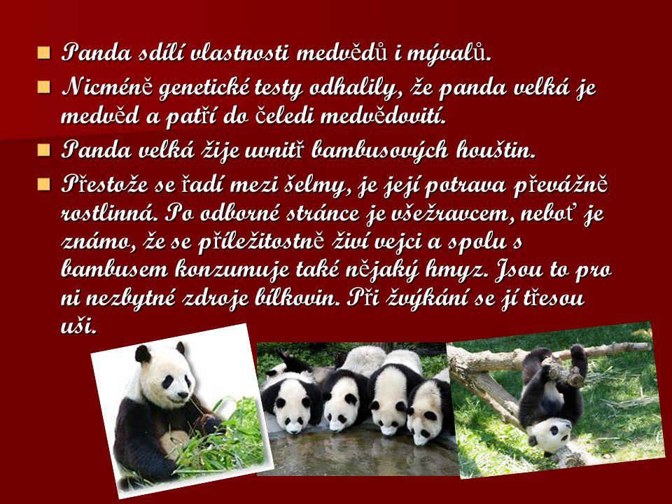 Panda sdílí vlastnosti medv ě d ů i mýval ů. Panda sdílí vlastnosti medv ě d ů i mýval ů. Nicmén ě genetické testy odhalily, že panda velká je medv ě
