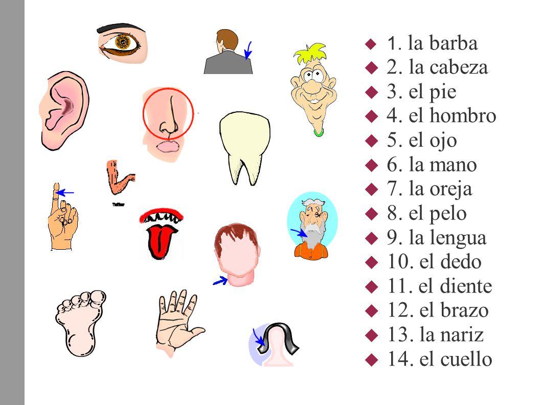  1. la barba  2. la cabeza  3. el pie  4. el hombro  5. el ojo  6. la mano  7. la oreja  8. el pelo  9. la lengua  10. el dedo  11. el dien