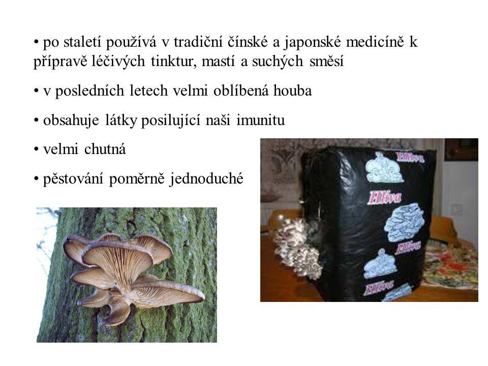po staletí používá v tradiční čínské a japonské medicíně k přípravě léčivých tinktur, mastí a suchých směsí v posledních letech velmi oblíbená houba o