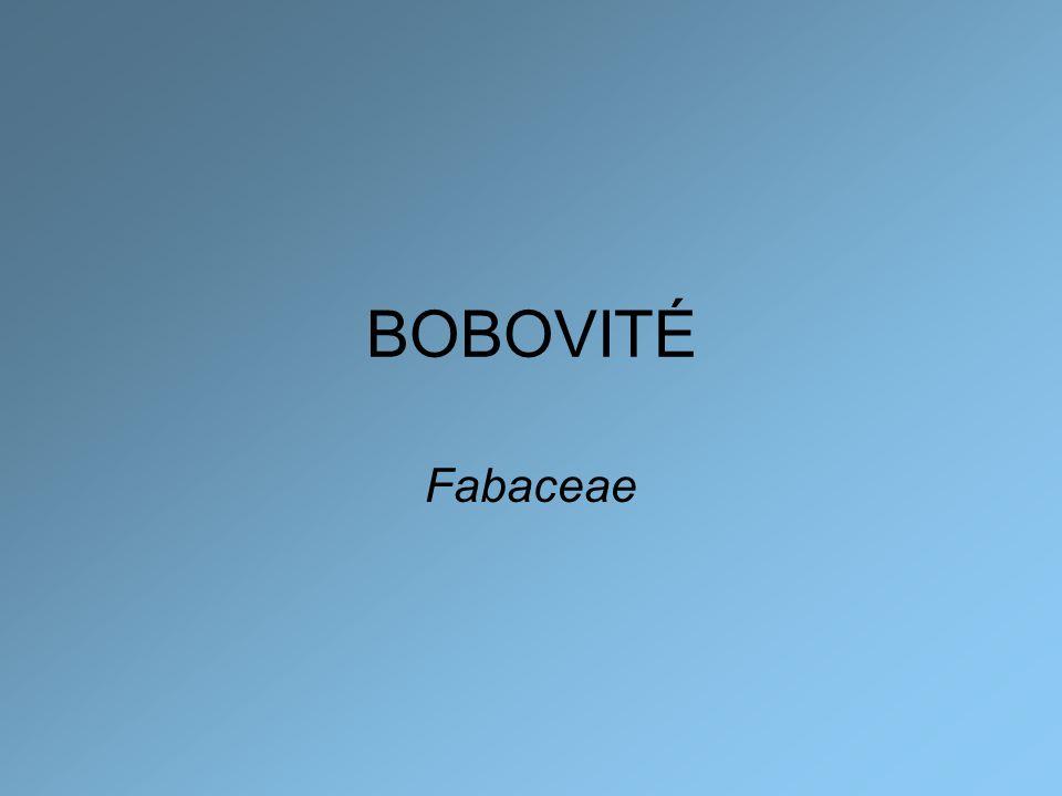 BOBOVITÉ Fabaceae