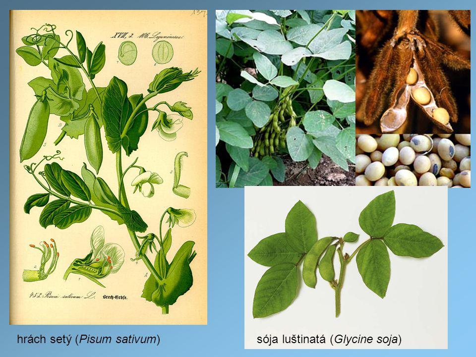 hrách setý (Pisum sativum)sója luštinatá (Glycine soja)