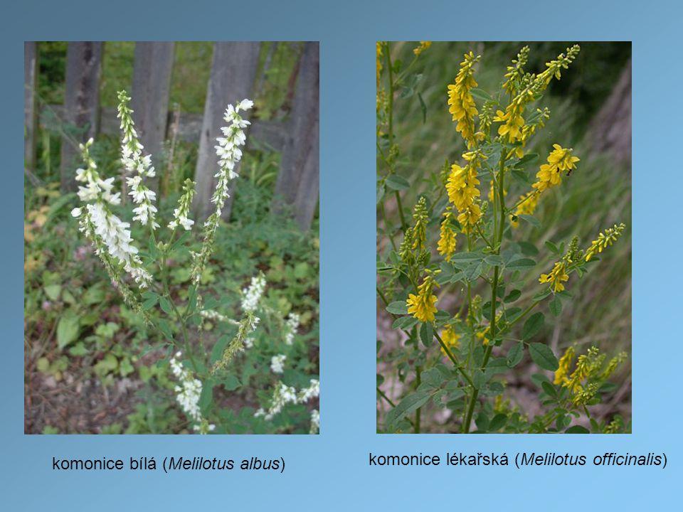 komonice bílá (Melilotus albus) komonice lékařská (Melilotus officinalis)