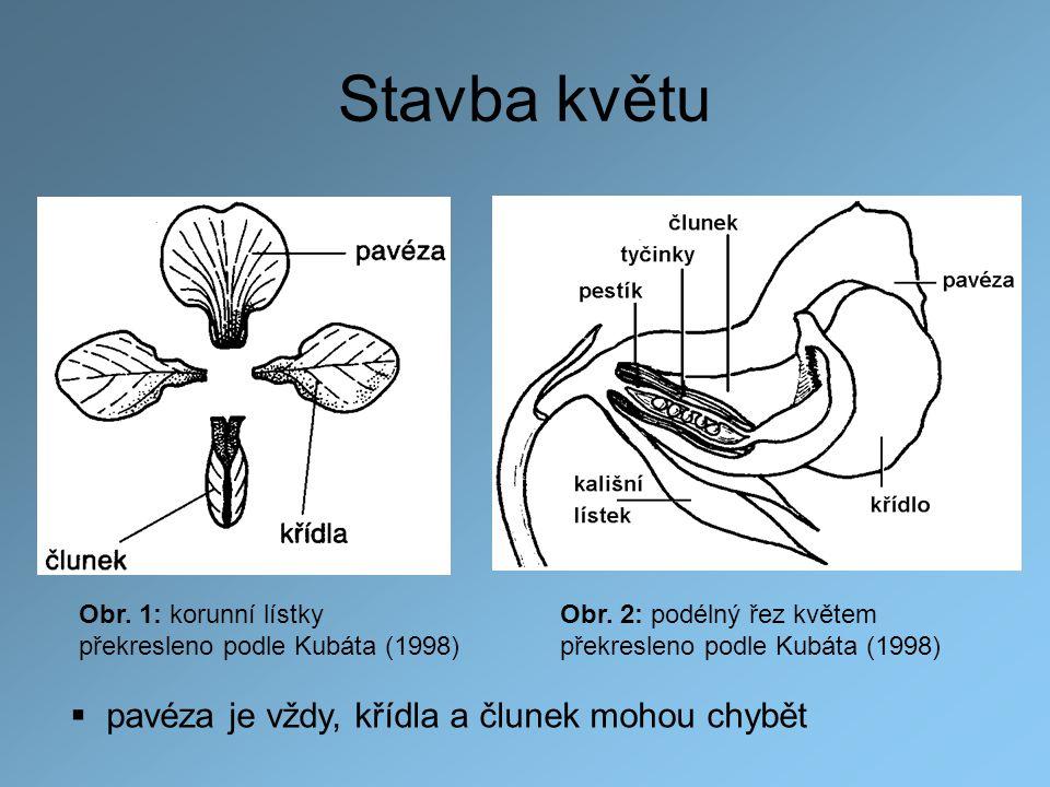 Obr. 2: podélný řez květem překresleno podle Kubáta (1998) Stavba květu Obr. 1: korunní lístky překresleno podle Kubáta (1998)  pavéza je vždy, křídl
