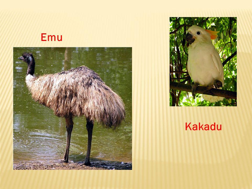 Emu Kakadu